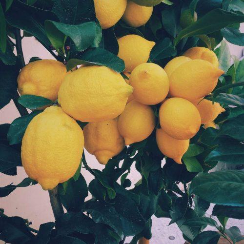 Perfecte Lemon Curd